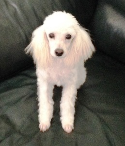 Adoption Donation $600
