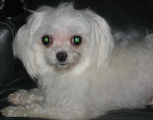 Adoption donation $500