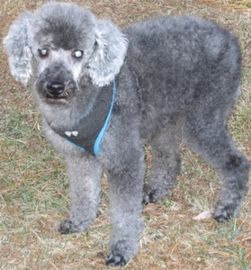 Adoption donation $0 Timmy is in our senior to senior program
